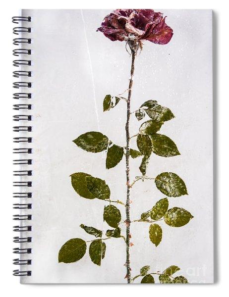 Rose Frozen Inside Ice Spiral Notebook by John Wadleigh