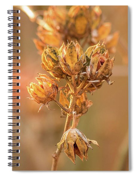 Rose Of Sharon In Winter Spiral Notebook