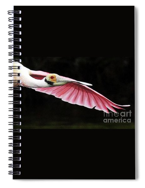 Roseate Spoonbill In Flight Spiral Notebook