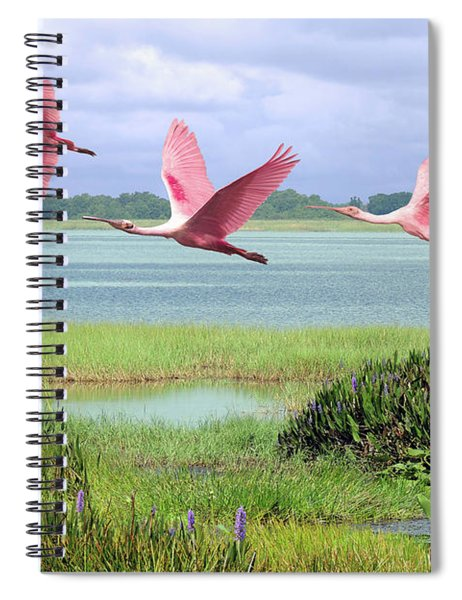 Roseate Spoonbills Of Florida Bay Spiral Notebook