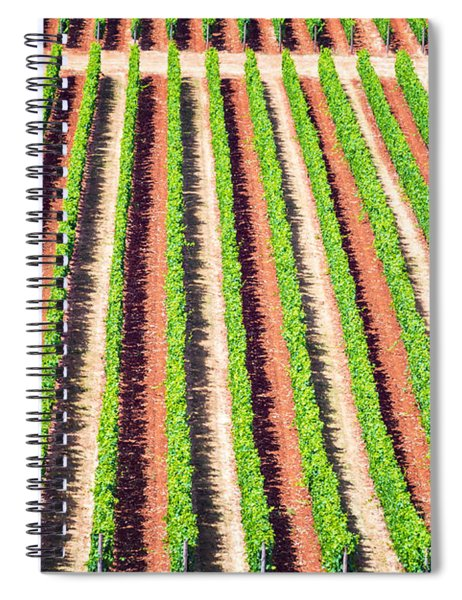 Rows Of Grape Vines Spiral Notebook