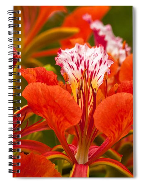 Spiral Notebook featuring the photograph Royal Poinciana by Ed Gleichman