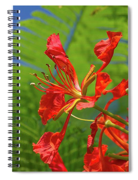 Royal Poinciana Flower Spiral Notebook