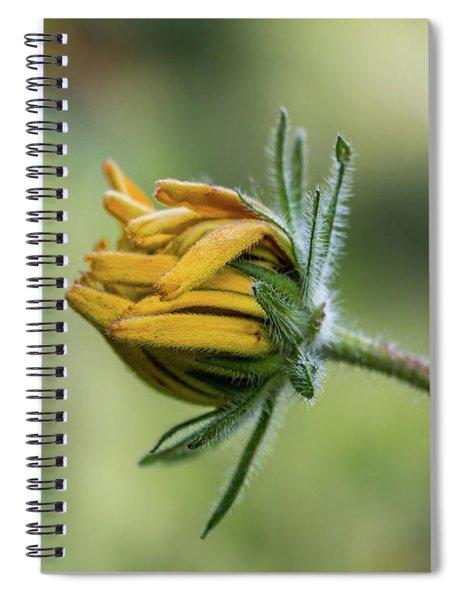 Rudbeckia Fuzzy Bud Spiral Notebook