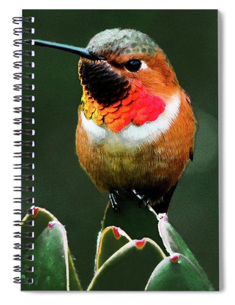 Rufous Hummimgbird Spiral Notebook