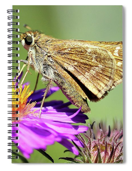 Sachem Skipper Spiral Notebook