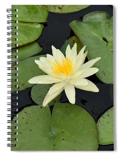Sacred Lotus Spiral Notebook