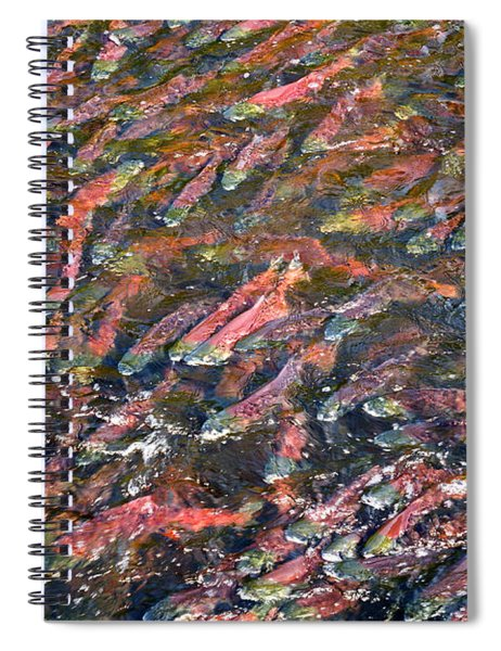 Salmon So Thick You Can Walk On Them Spiral Notebook