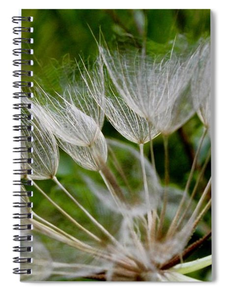 Salsify  Spiral Notebook