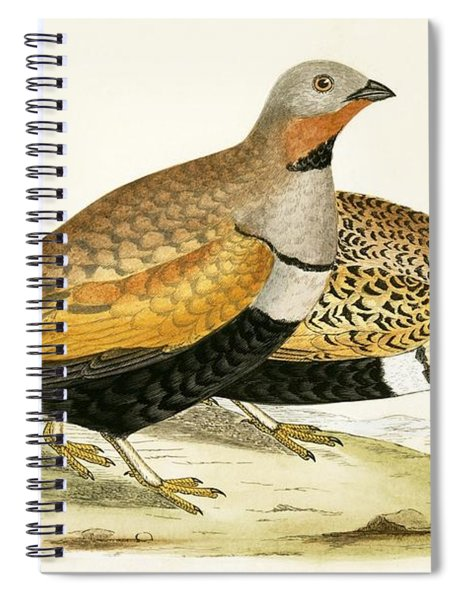 Sand Grouse Spiral Notebook