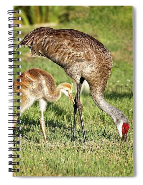 Sandhill Crane And Colt Spiral Notebook