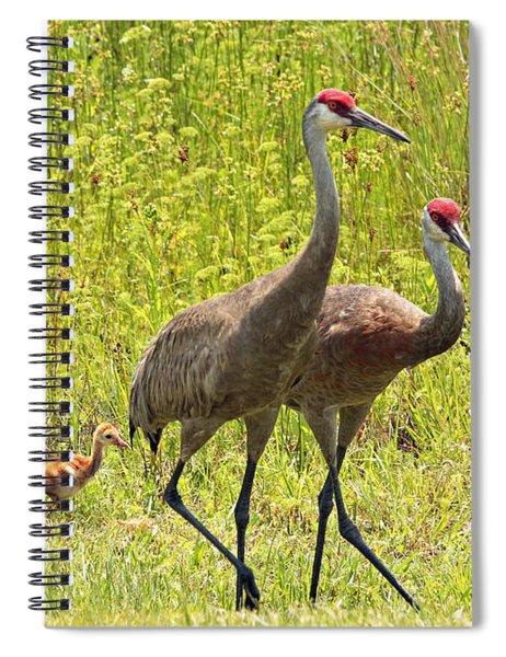 Sandhill Crane Family Spiral Notebook