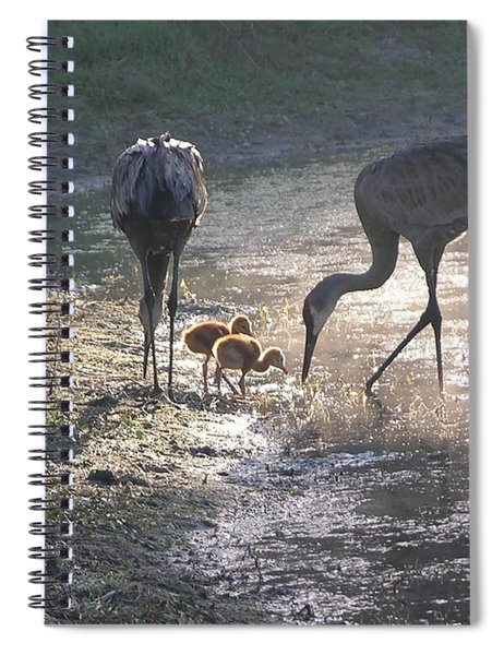 Sandhill Crane Family In Morning Sunshine Spiral Notebook