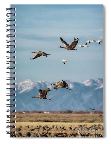 Sandhill Crane Migration Spiral Notebook