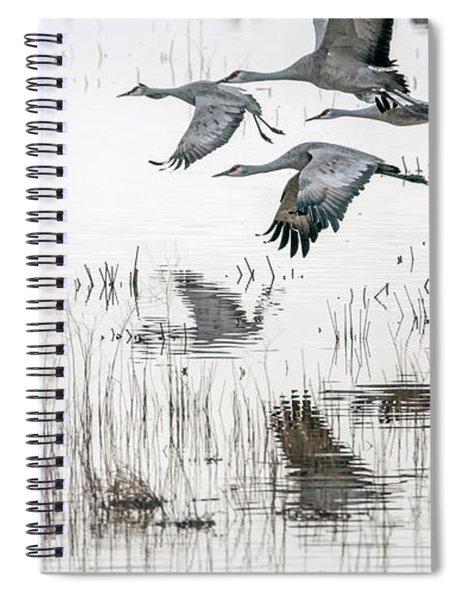 Sandhill Cranes 5968-022015-1cr Spiral Notebook
