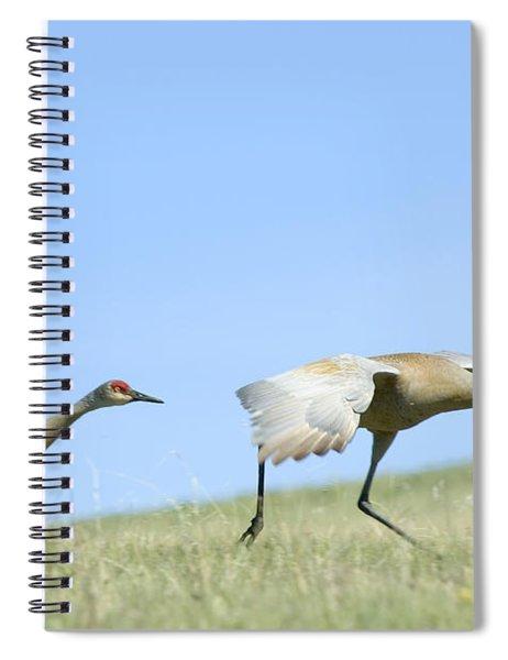 Sandhill Cranes Taking Flight Spiral Notebook