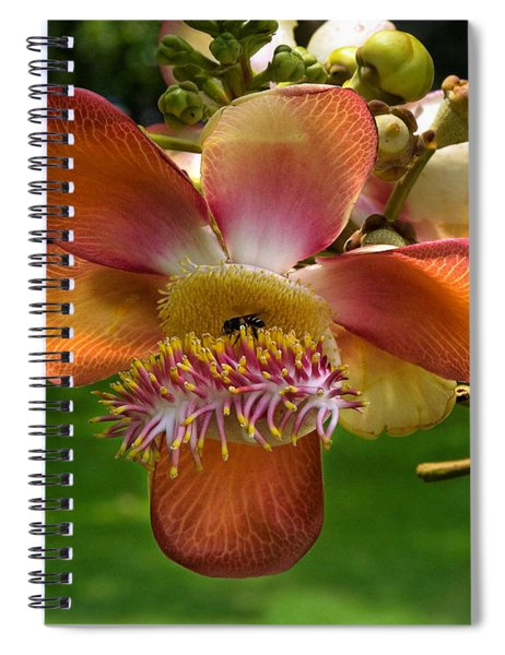 Sara Tree Flower Dthb104 Spiral Notebook