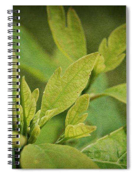Sassafras Tree Spiral Notebook