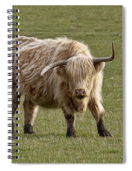 Sauvie Island Cow Spiral Notebook