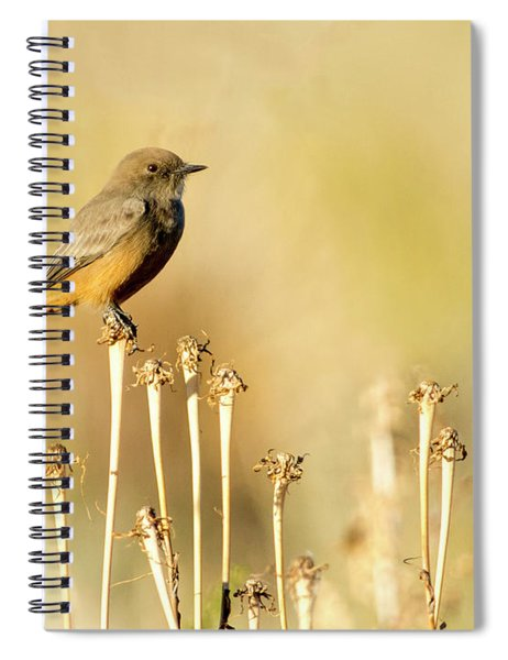 Say's Phoebe Spiral Notebook