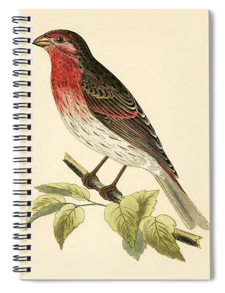 Scarlet Bullfinch Spiral Notebook