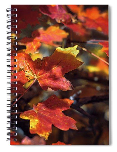 Scarlet September Spiral Notebook