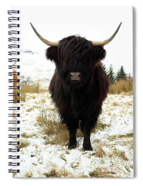 Scottish Black Highland Coo Spiral Notebook