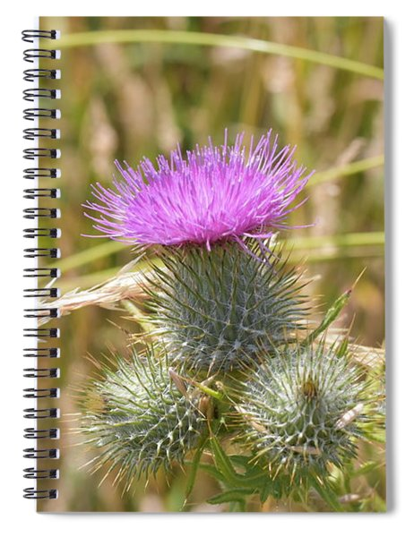 Scottish Thistle Spiral Notebook