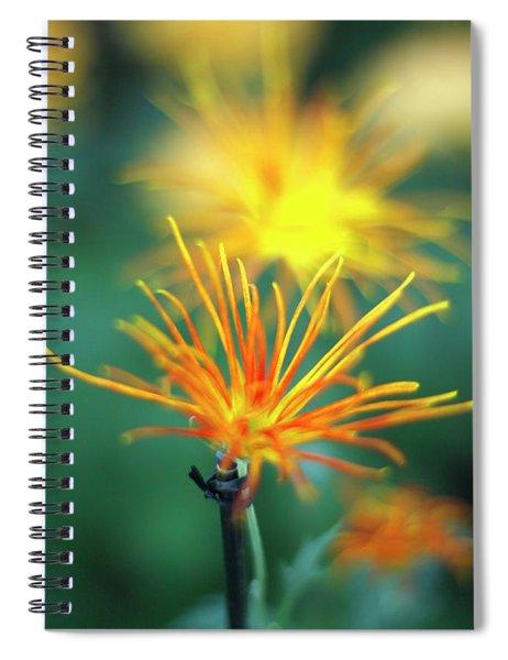 Scraggly Mum Spiral Notebook