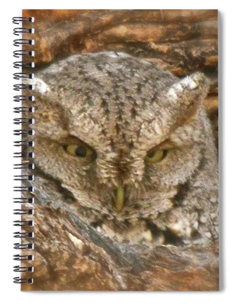 Screech Owl On Spring Creek Spiral Notebook