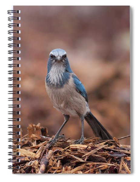 Scrub Jay On Chop Spiral Notebook