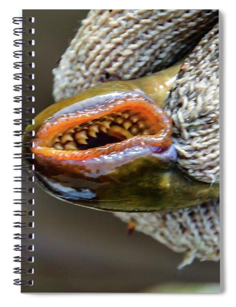 Sea Lamprey Spiral Notebook