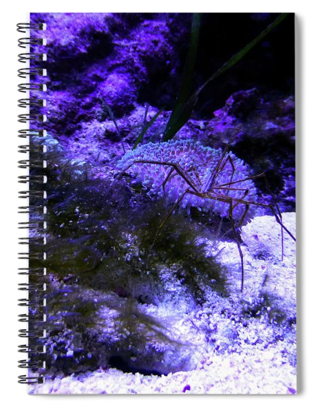 Sea Spider Spiral Notebook