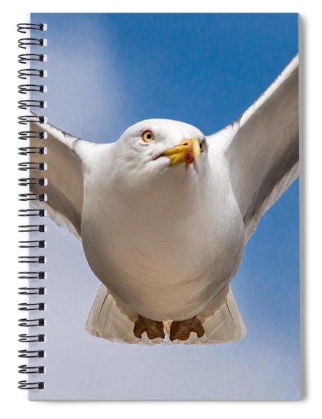 Seabird Closeup Spiral Notebook
