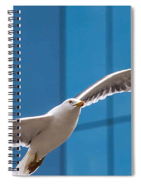 Seabird Flying On The Glass Building Background Spiral Notebook