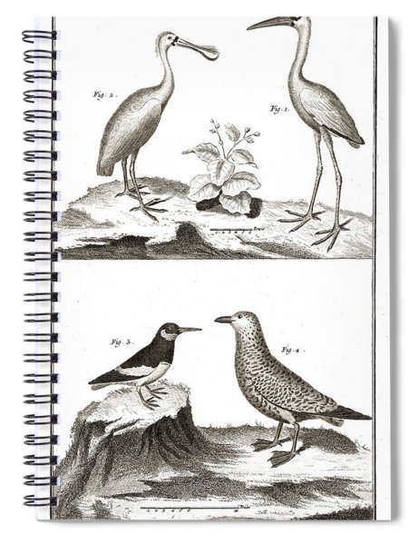 Seabirds - Ibis, Spoonbill, Eurasian Oystercatcher, Gull Spiral Notebook