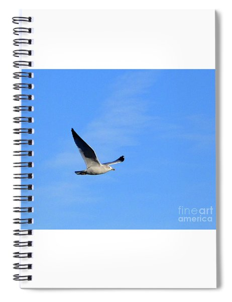 Seagull In Flight Spiral Notebook