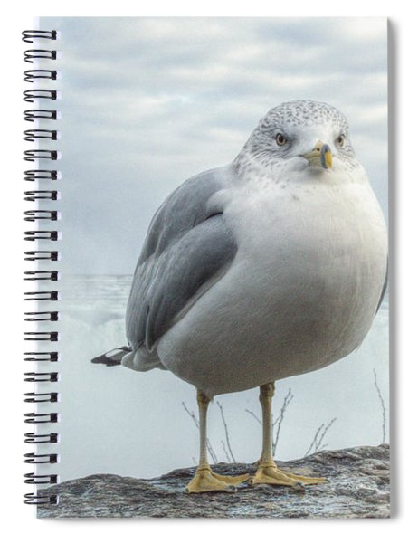 Spiral Notebook featuring the photograph Seagull Model by Garvin Hunter