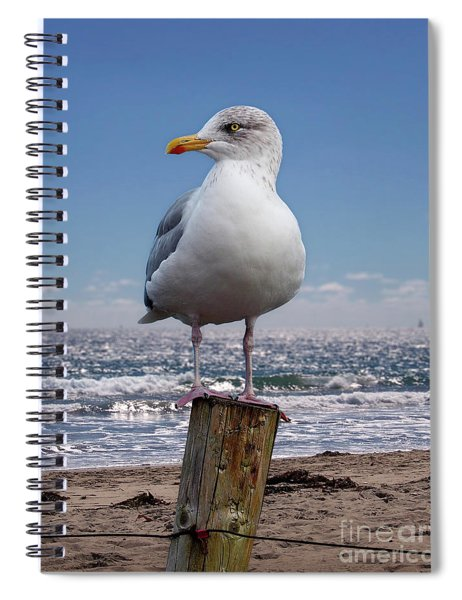Seagull On The Shoreline Spiral Notebook