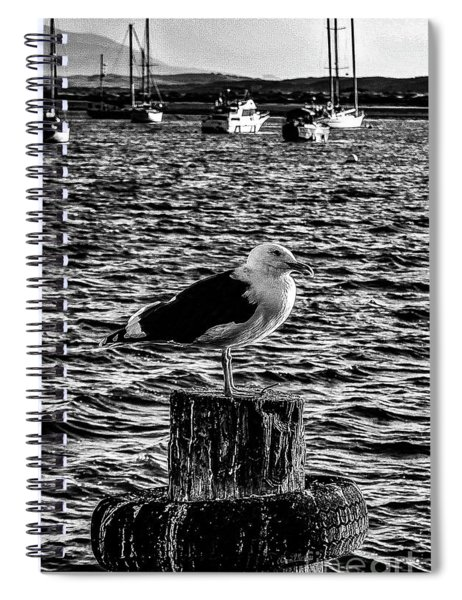 Seagull Perch, Black And White Spiral Notebook