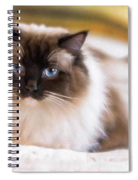 Seal Point Bicolor Ragdoll Cat Spiral Notebook