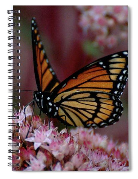 Sedum Butterfly Spiral Notebook