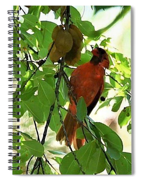 Seeking Fruit Spiral Notebook