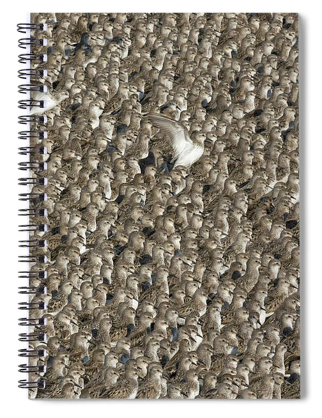 Semipalmated Sandpipers Spiral Notebook