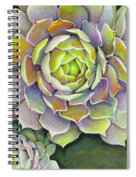 Sempervivum Pacific Blue Ice Hen And Chicks Succulent Colored Pencil Drawing Spiral Notebook