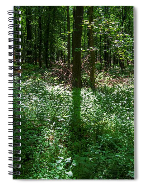Shadow And Light In A Forest Spiral Notebook