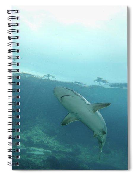 Shark Attack Spiral Notebook