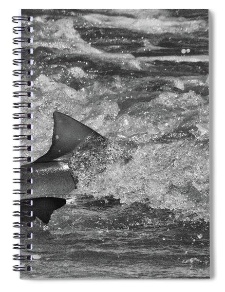 Shark Spiral Notebook