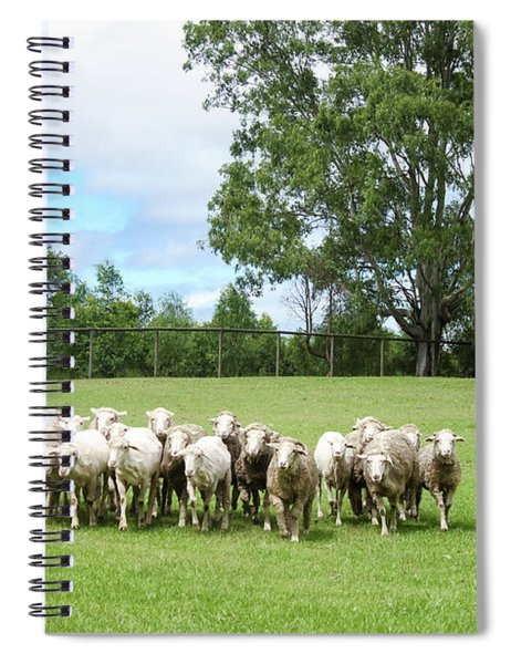 Sheep Coming Home Spiral Notebook