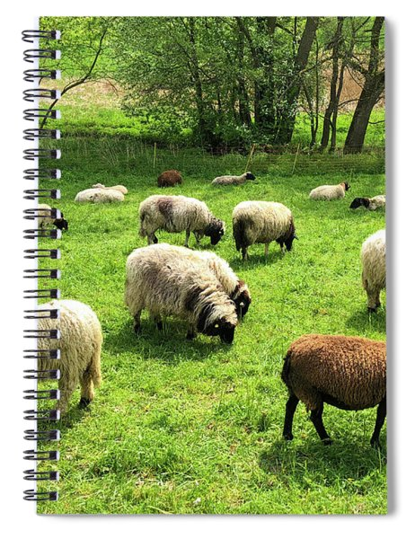 Sheep On Meadow Spiral Notebook